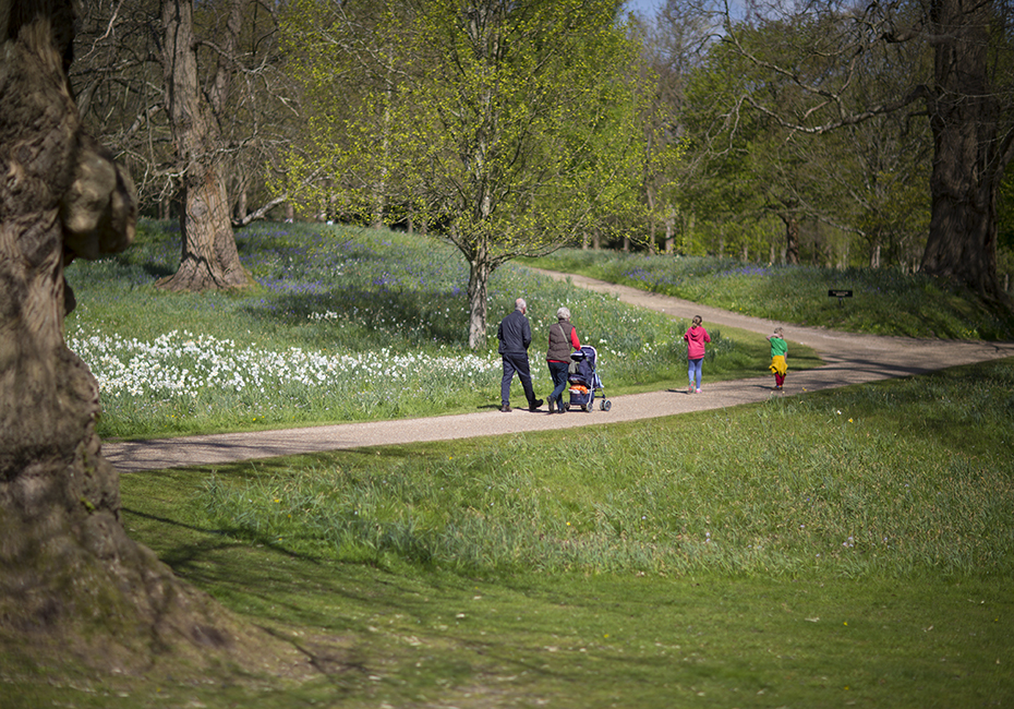 Family walk bluebells campaign photography